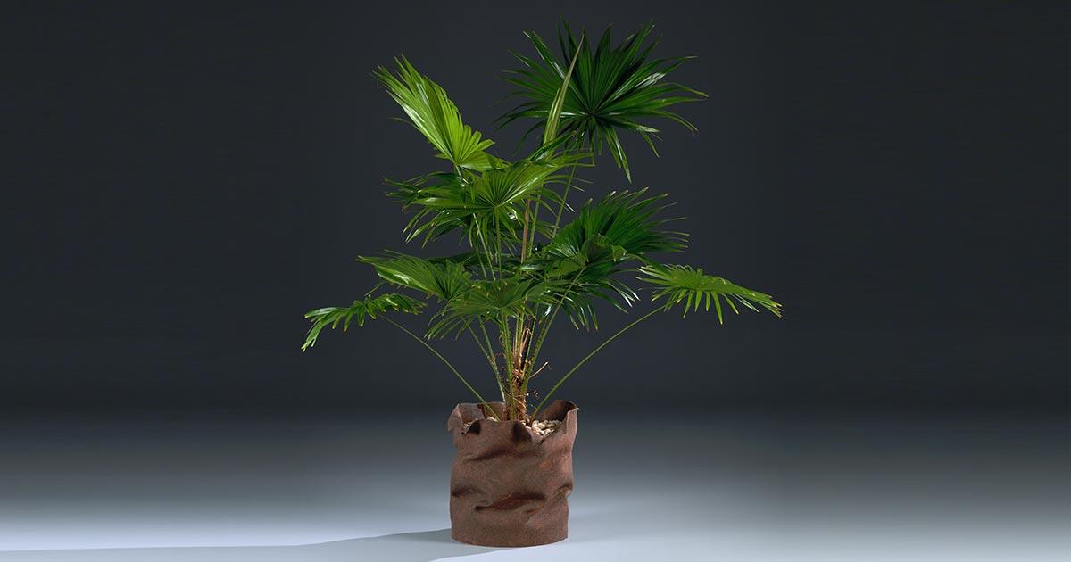 Echoppe plantenmeubel